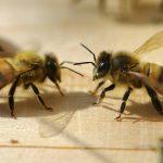la maison de l'abeille de Cassagnoles, au seuil de la ruche d'observation