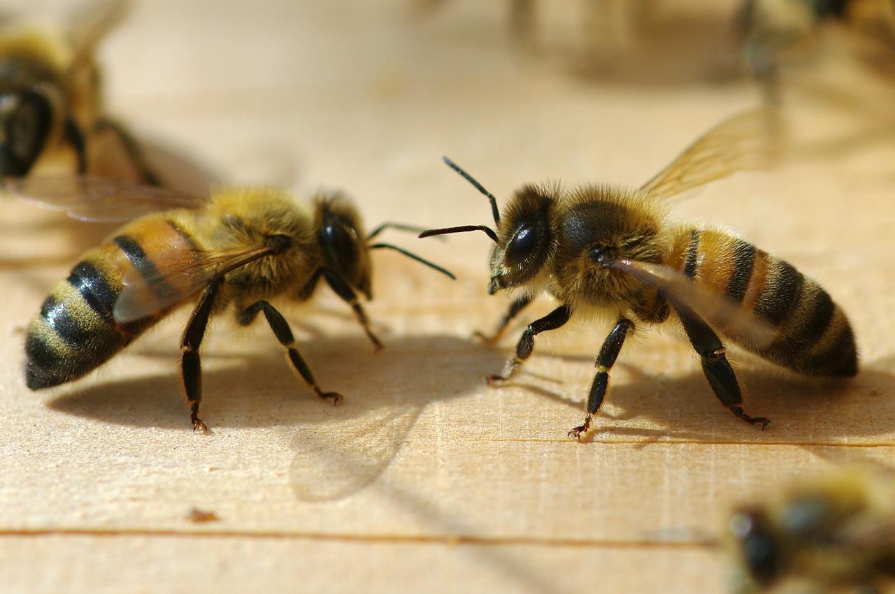 la maison de l'abeille de Cassagnoles, sur le seuil de la ruche