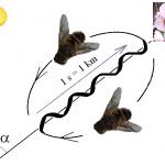 danse des abeilles, wikipedia