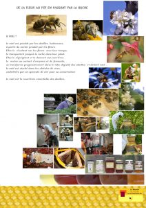 planche explicative n°1 de la Maison de l'abeille à Cassagnoles