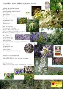 planche explicative n°2 de la Maison de l'abeille à Cassagnoles