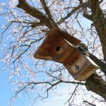 la maison de l'abeille, amandier