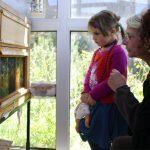 la maison de l'abeille, observation d'une ruche aux parois de verre
