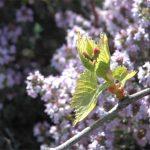 la maison de l'abeille, vigne et thym
