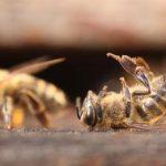 les abeilles meurent, Perpignan 7 juin 2014
