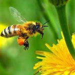 article de Liberation sur les insecticides agricoles