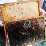 Rayon de ruches atteints