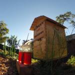 Une ruche usine