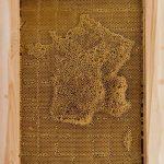 Carte en cire d'abeille