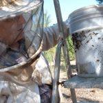 Angel Marin apiculteur à Félines-Minervois