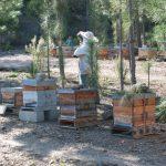Angel Marin, apiculteur à Félines-Minervois