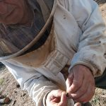 Angel Marin, apiculteur à Félines-Minervois, observant un bourdon malade
