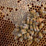 Erik Charrier, apiculteur à La Caunette,