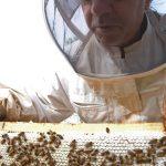 Erik Charrier, apiculteur à La Caunette