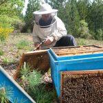 Guy Borios, la maison de l'abeille de Cassagnoles