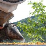 travail de Guy Borios, la maison de l'abeille de Cassagnoles