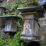 mur de ruches en chine