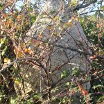 nid de frelons asiatiques à cassagnoles