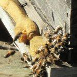 ruche en hiver à saint andré
