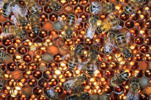 j'aime les abeilles point fr site d'Eric Tourneret
