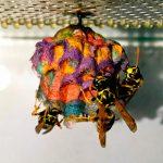 nids de guèpes multicolors