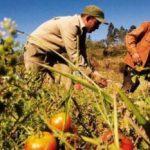 Cuba, agriculture