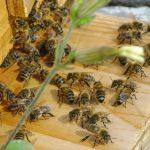 La maison de l'abeille, la ruche