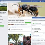 Facebook Chemin Cueillant