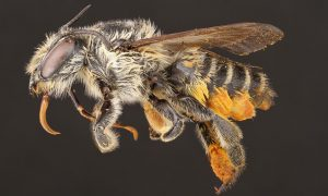 theguardian, bees