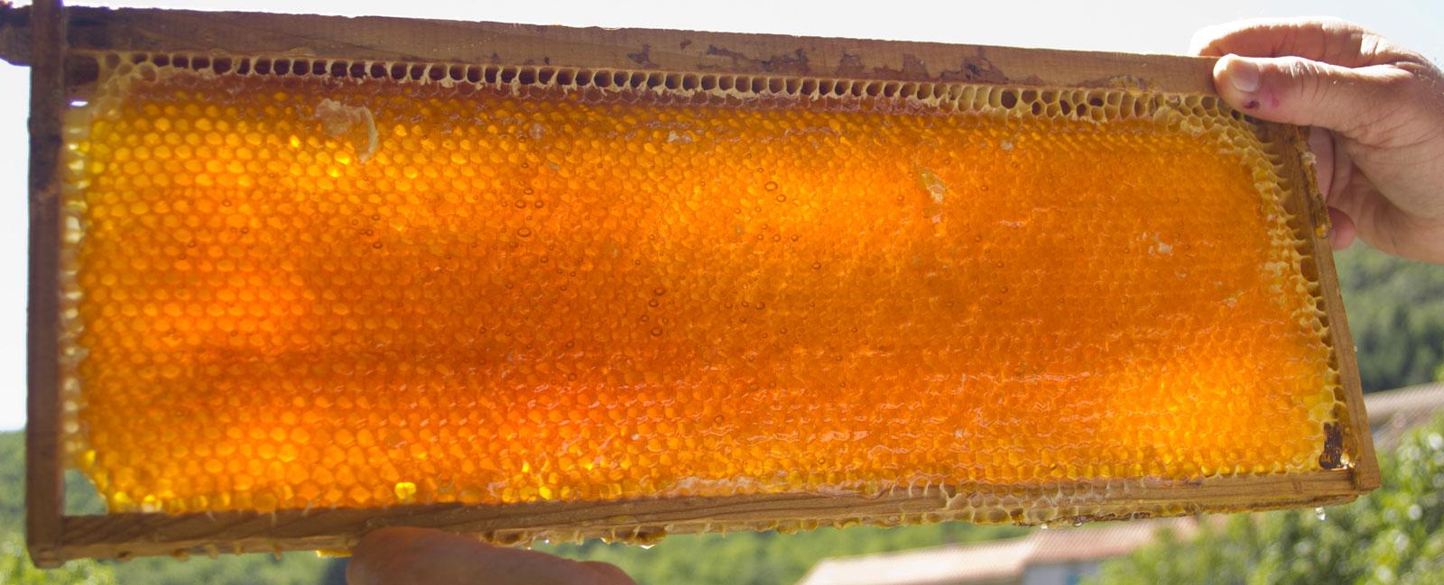 Rayon de miel à la Maison de l'abeille