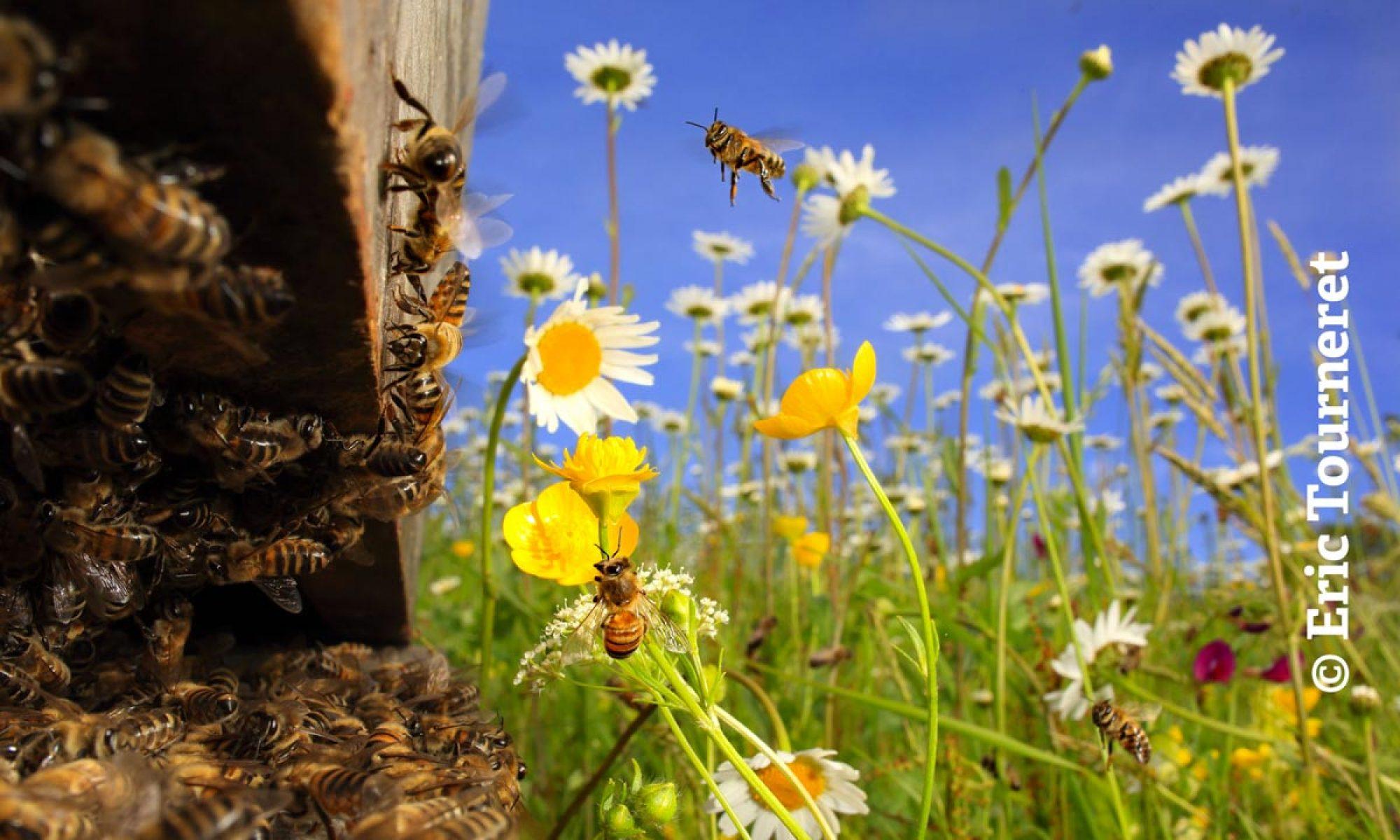 La Maison de l'abeille