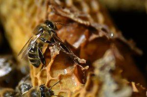 abeille TV5 Monde