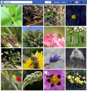 Facebook Groupe Photobio de la Maison de l'abeille de Cassagnoles