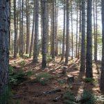 Bain de forêt avec Pol'En